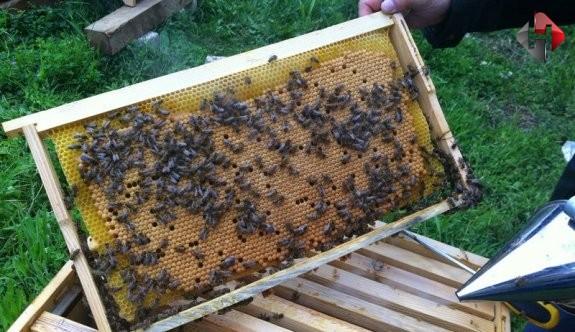Arıcılar Yaşadıkları Zorlukları  Dile Getirdiler
