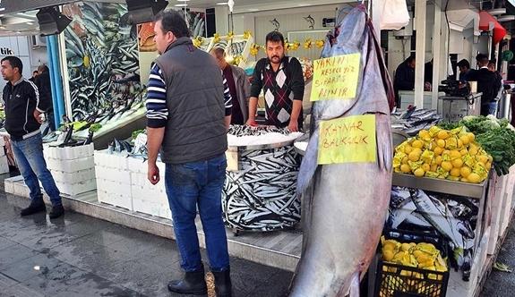 Bu Orkinos Balığı Kaç Kilo?