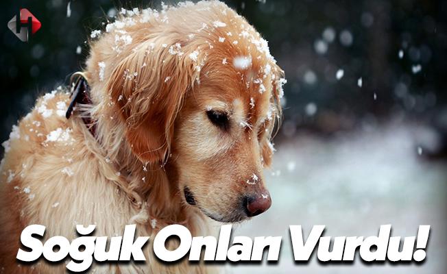 Türkiye Dondu, Köpek ve Kediler Ölüyor!