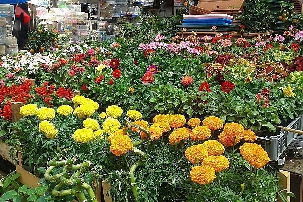 Çiçek Pazarı'nda Yenileme Çalışmaları