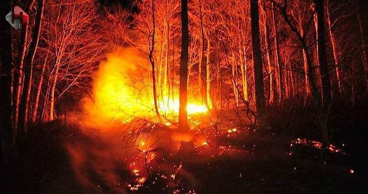 Güney Kıbrıs'taki orman yangını