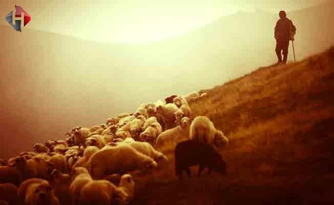 Kaval çalamayan çoban çareyi cep'te buldu