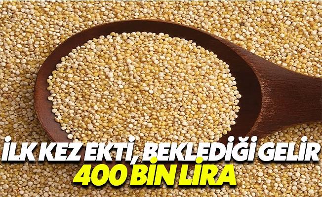 Bingöl'de kinoa bitkisi ekti, 400 bin lira gelir bekliyor