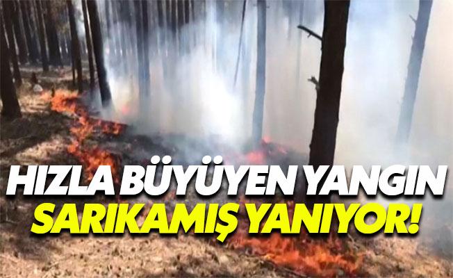 Sarıkamış Ormanları Yanıyor!