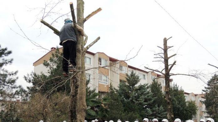 Ağaçların Kesilmesini Önlemek İçin Ağaca Çıktı