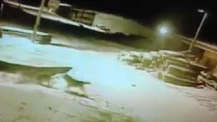 Kars'a inen aç kurtlar 5 köpeği telef etti