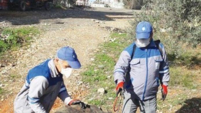 Gazipaşa'da Sinekle Mücadele Çalışmaları