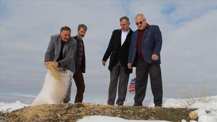Elazığ'da avcılar doğaya yem bıraktı