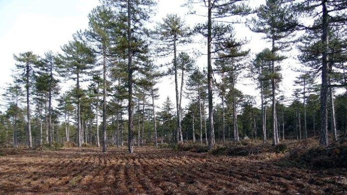Orman Ve Su İşleri Bakanlığı Antalya Çalışmaları