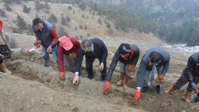 Mersin'de Maden Sahaları Topalak Çamur Tohumlarla Yeşillendiriliyor