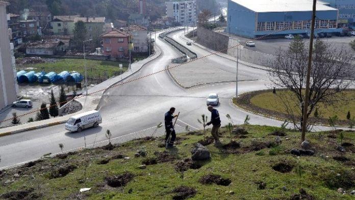 Karabük Belediyesinden Fidan Dikimi