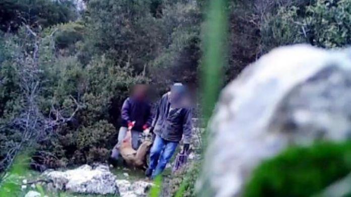 Yaban keçisini vuran kaçak avcılar fotokapana yakalandı