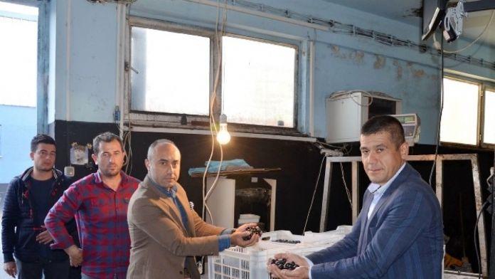 Mudanya Zeytin Kooperatifi Borçlarını Bitirdi
