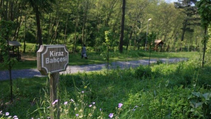 Kocaeli'deki Parklar Meyve Bahçesine Dönüşüyor
