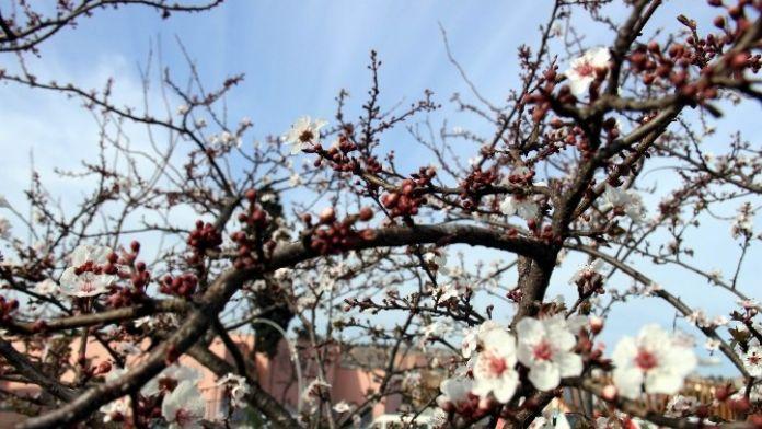 Mart Ayında Don Olursa Tarımda Verim Yüzde 40 Düşebilir