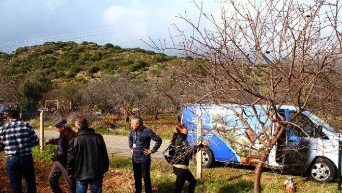 Büyükşehir, Datça'da Badem Ağaçlarını Sinekten Kurtarıyor