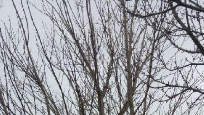 Üniversite Kampüsünde Kuşlar İçin Ağaç Kovuklarına Yuvaları Yapıldı