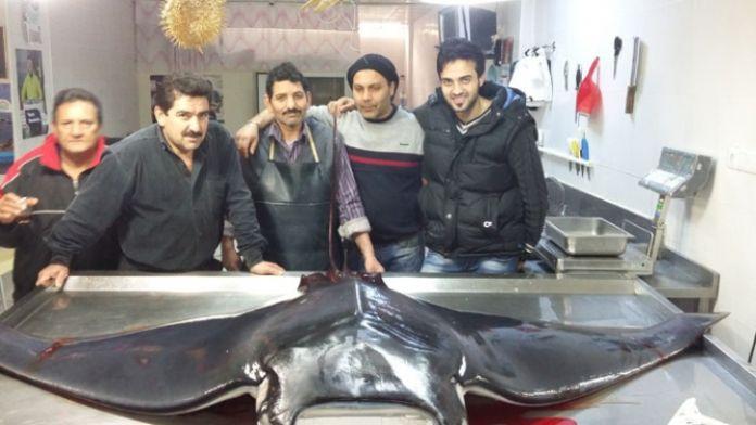 Balıkçı ağına 300 kiloluk 'uçan vatoz' takıldı