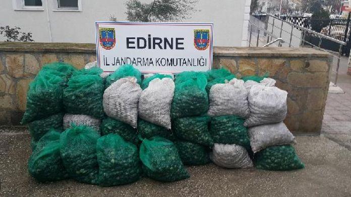 Enez'de 1.3 ton kaçak midye ele geçirildi