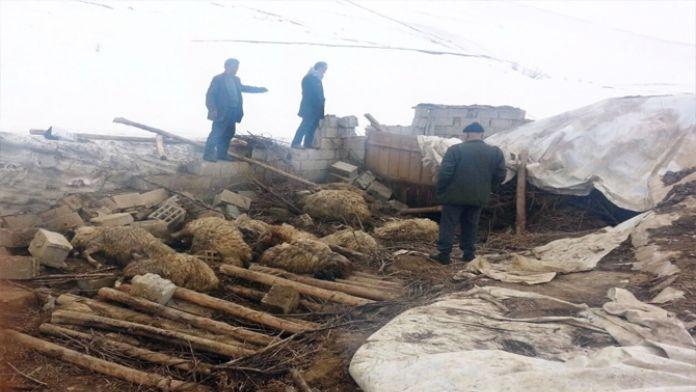 Çöken ahırda 70 koyun telef oldu