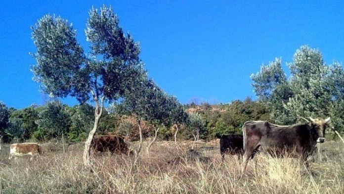 Çiftçi Malları Koruma Köylüyü İcra Kıskacına Aldı
