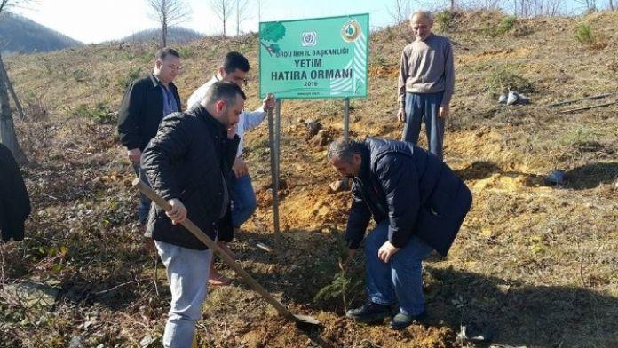 İHH'dan Fatsa'ya 'Yetim Hatıra Ormanı'