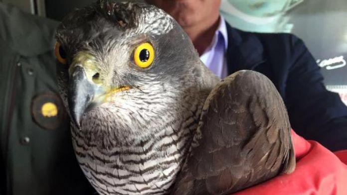 Sınır tellerine çarparak yaralanan kuş tedaviye alındı
