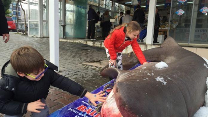 Marmara'da balıkçı ağına 'camgöz' takıldı