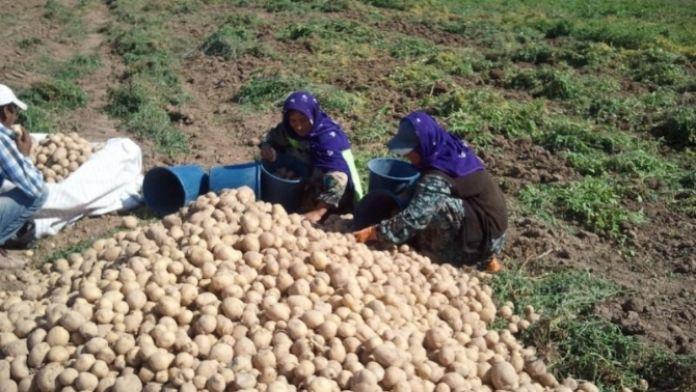 Mevsimlik tarım işçilerinin ücreti arttı