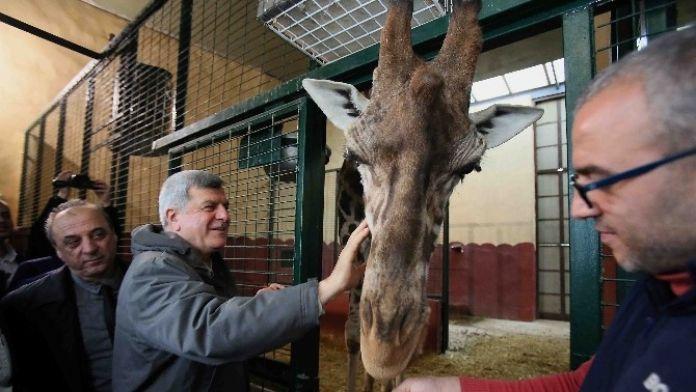 Başkan Karaosmanoğlu, Darıca Hayvanat Bahçesini Gezdi