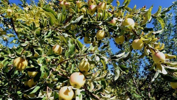 Savaklı Tarımsal Kalkınma Kooperatifi Kuruldu