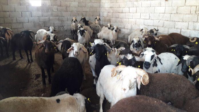 Hatay'da hayvan kaçakçılığı operasyonu