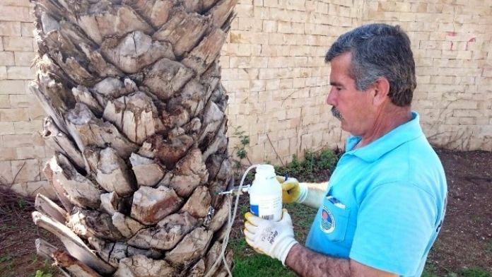 Büyükşehir Belediyesi'nden Ağaçlara Enjeksiyonlu Koruma