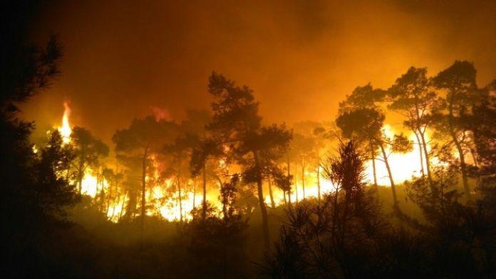 (Özel Haber) Orman İşçisinin Alevlere Karşı Çaresizliği
