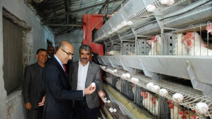 Vali Demirtaş Yumurta Üretim Tesisini Gezdi