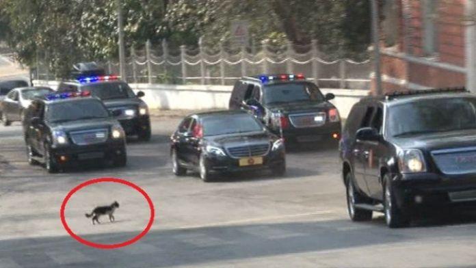 Erdoğan'ın konvoyunda 'kedi' sürprizi