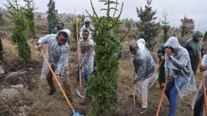 Kent Ormanı'nda Artık Ruanda'nın Da Ağaçları Var