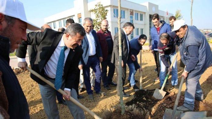 Darıca Gençlik Merkezi Ağaçlandırıldı
