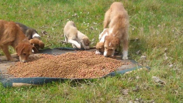 Hayvanseverlerden Sahillere Çıkarma