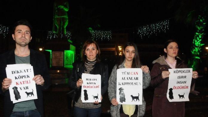 Çaycuma'da Şiddet Gören Sokak Hayvanları İçin Oturma Eylemi