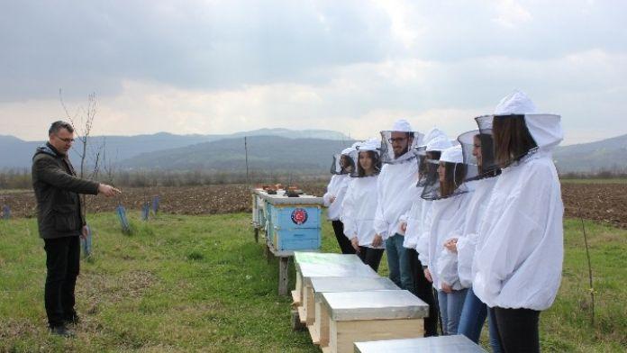 TİKA'dan Bosna Hersek'te Arıcılığa Destek