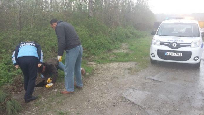 Logara Düşen Köpeği Belediye Ekipleri Kurtardı