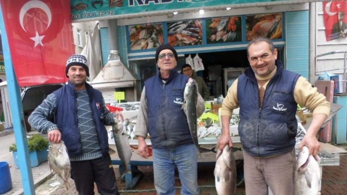 Vatandaşlar Bu Balıkların Yanına Yaklaşamıyor
