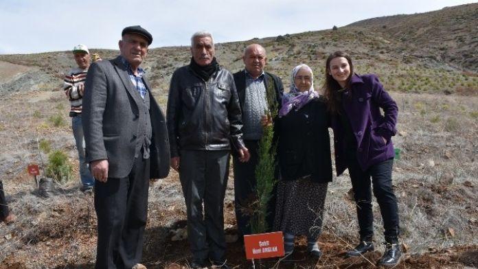Acıpayam MYO Hatıra Ormanına Ağaç Dikimi Yapıldı