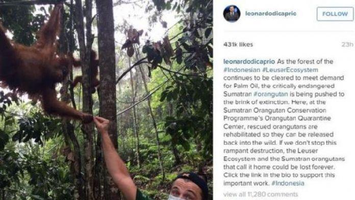 Endonezya'dan DiCaprio'ya tehdit gibi uyarı