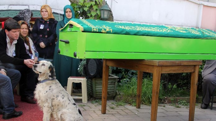 Köpeği minik Buğra'nın tabutunun başından ayrılmadı