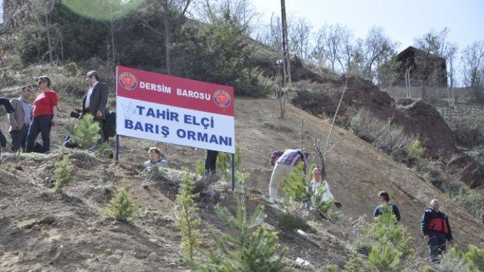 Tunceli'de Tahir Elçi İçin Barış Ormanı
