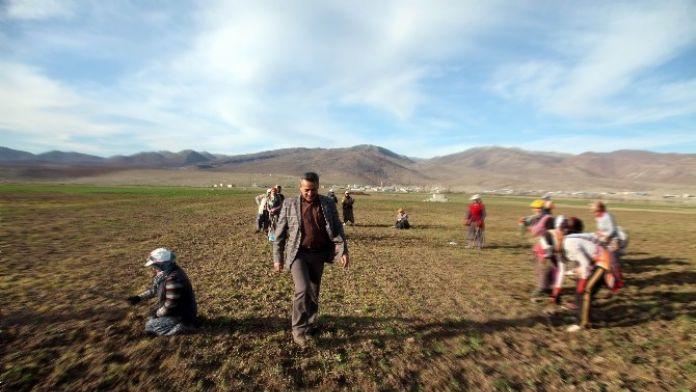 Seydişehir'de 249 Üretici, Tarımsal Desteklerden Faydalanıyor