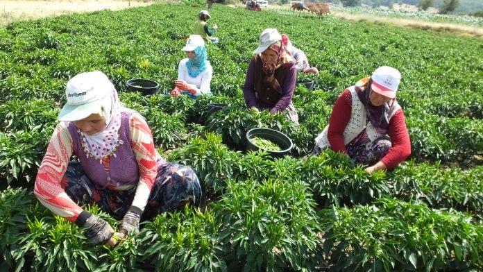 Çiftçiler dikkat: Destek başvuruları için süre uzatıldı