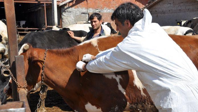 Türkiye'den Azerbaycan'a 500 bin doz şap aşısı